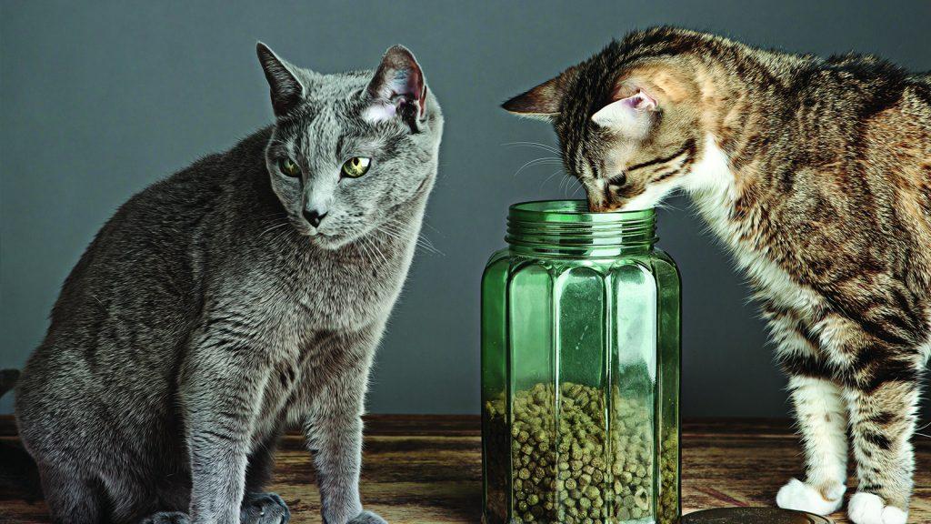 Yaşlı kedilerde endokrin bozukluğu ile alakalı kimyasallar
