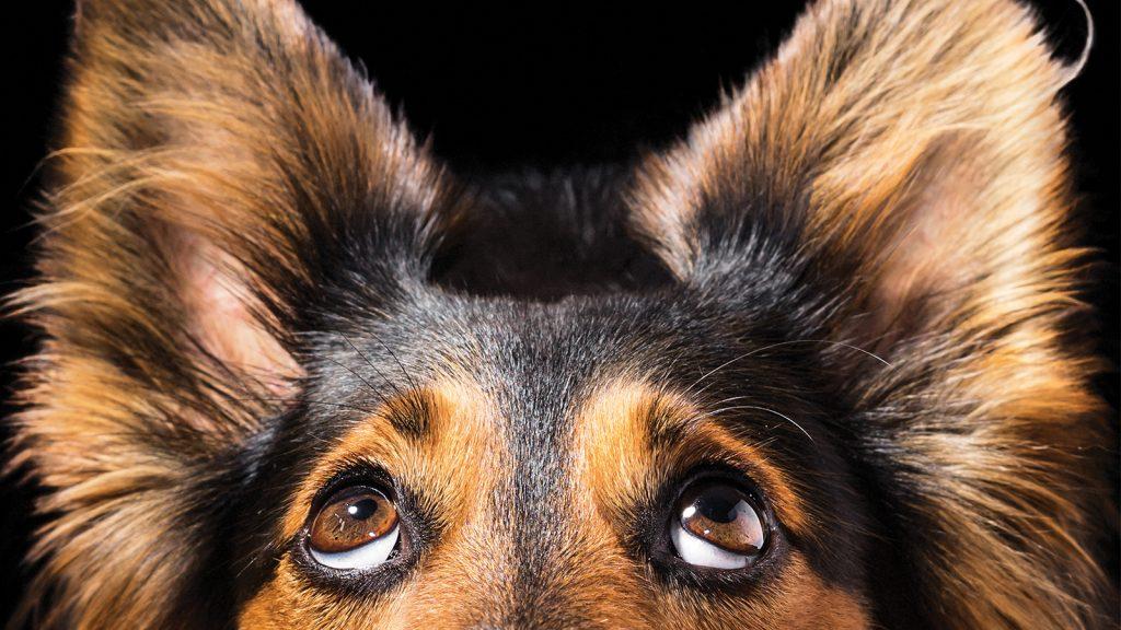 Köpekler neyi bilmediğini biliyor