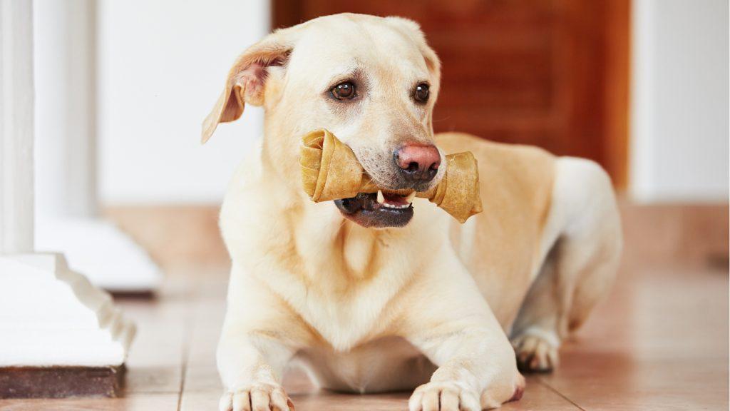 Köpek dişi kırıklarına dair yeni görüşler ortaya koyuldu