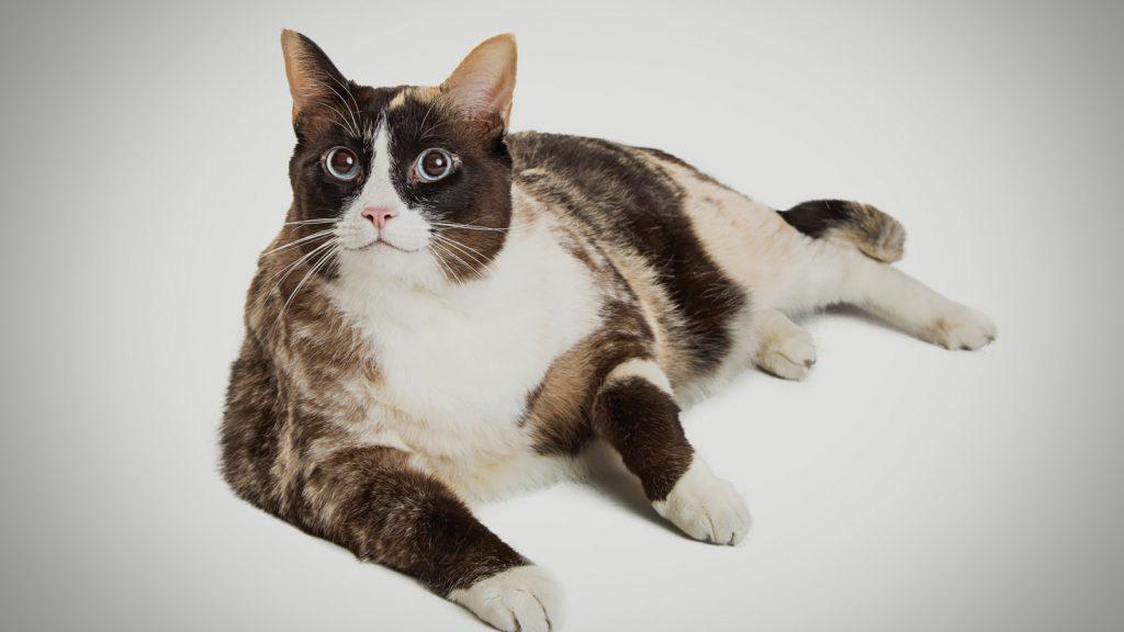 Köpek-kedilerde obezite artışı raporlandı