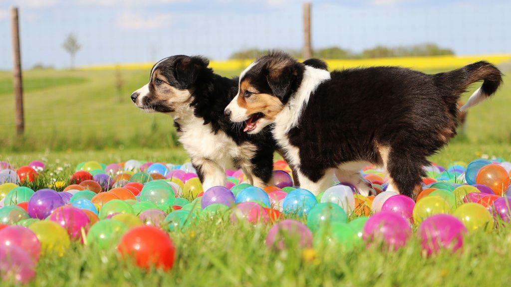 Yavru köpeklerde aşırı besleme  ve fazla egzersiz yararlı mı?
