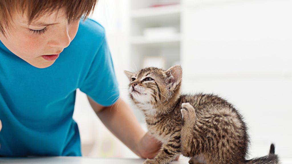 Kedi ve köpeklerde pire alerjik dermatiti (FAD)