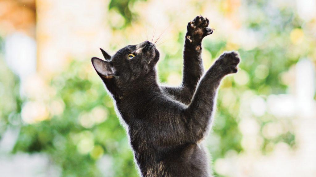 Tarih öncesi kediler ve köpekler yarıştı: kazanan kediler!