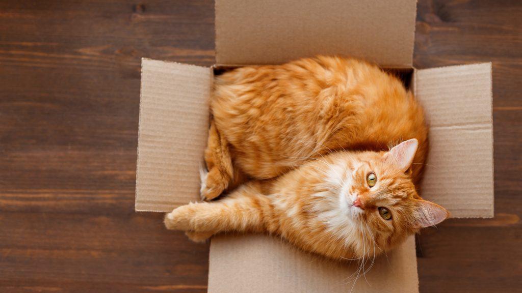 Kediler, kutuları ile daha az gergin!