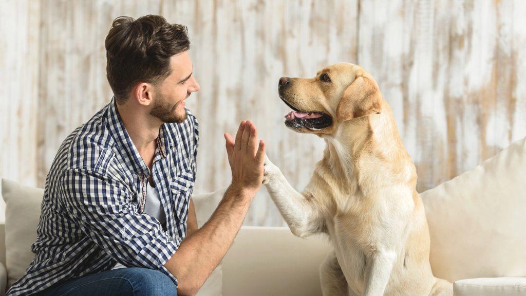 Köpek beynini selektif ıslah şekillendirdi
