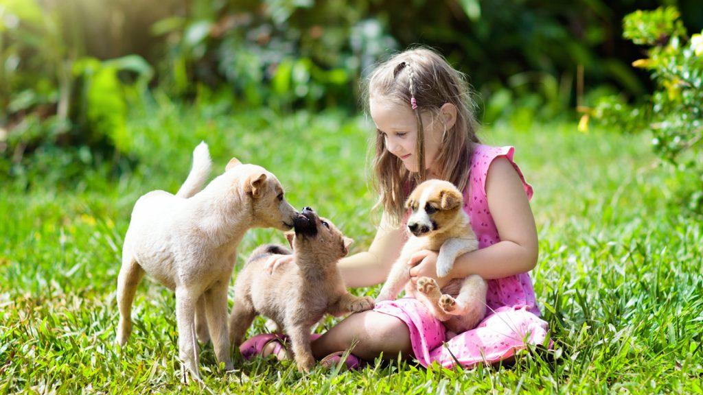 Köpek ve çocuk osteosarkoması arasındaki genetik benzerlik