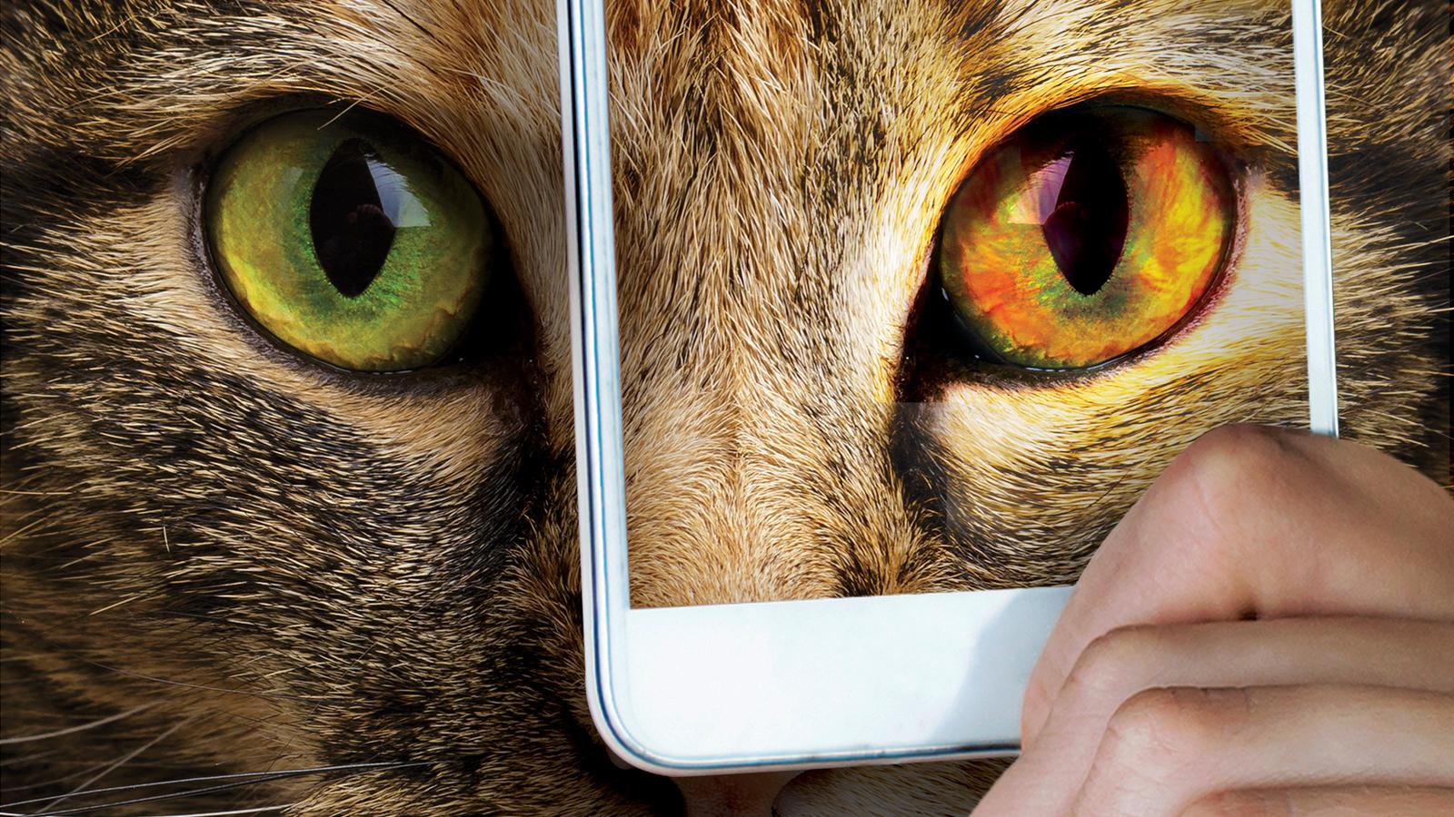 Klinik oftalmolojide akıllı telefon kullanımı