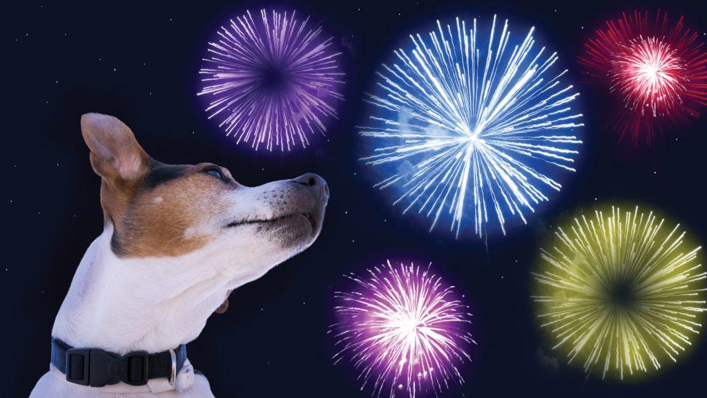 Gürültü korkusu köpeklerin  % 49'unu derinden etkiliyor