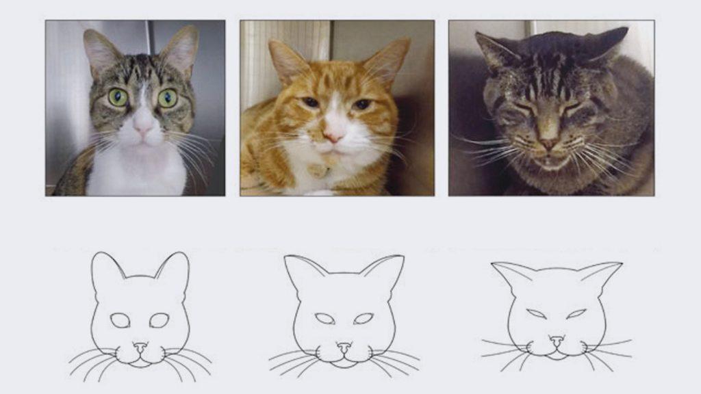 Feline Grimace Scale, kedilerde ağrıyı yorumlamaya yardımcı