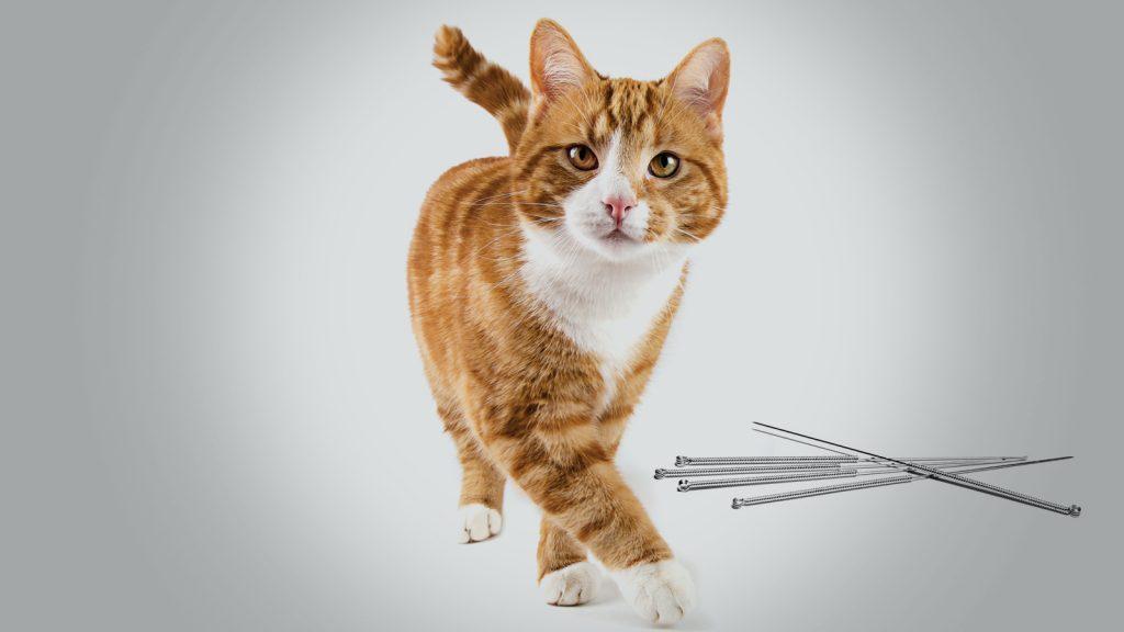 Kedilerin ve insanların ortak sorunu; konstipasyon