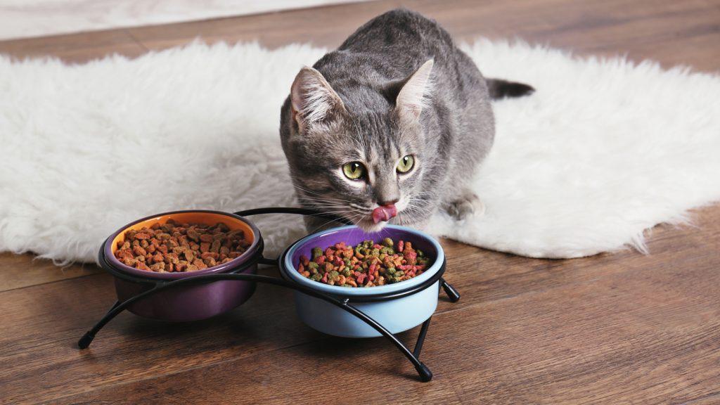 Kedi ve köpeklerde proteinürinin teşhis ve yönetiminde güncel yaklaşımlar