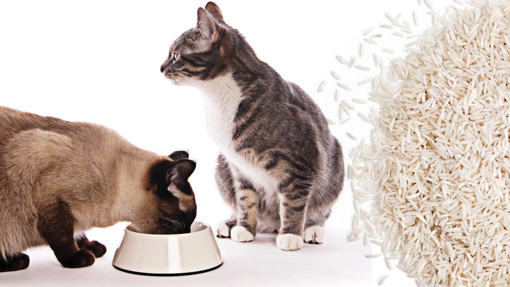 Glisemik indeks, pet gıdaları için bir kıstas mı?