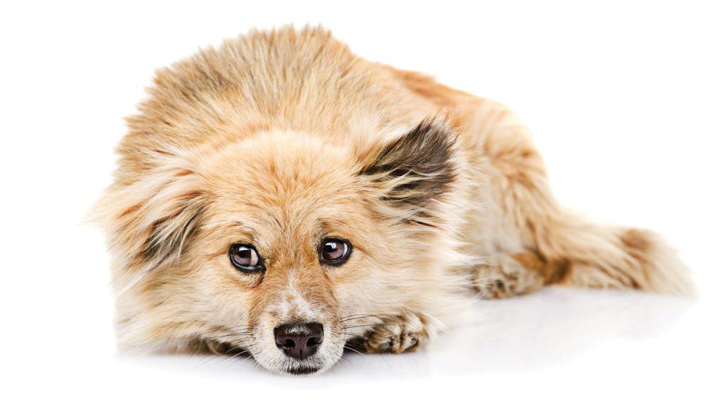 Cezalandırıcı eğitim köpekleri karamsar yapıyor