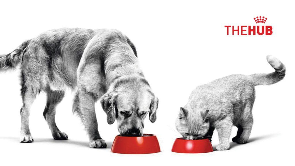 Hayvan sahipleri için eşsiz  bir deneyim: Royal Canin HUB