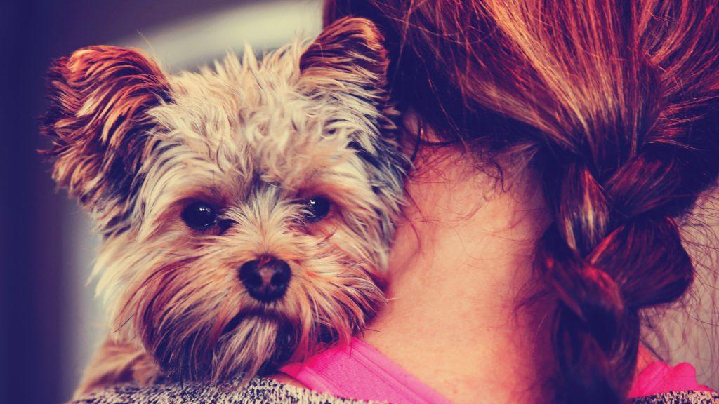 Yeni araştırmalar köpeklerde ayrılık kaygısının nedenlerini özetliyor
