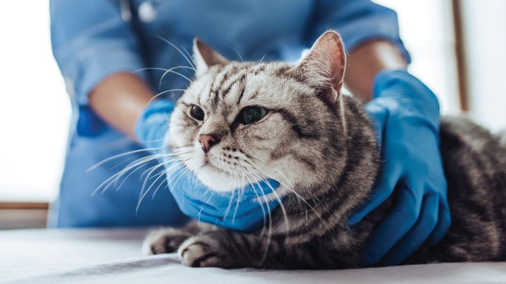 """WSAVA, kedi ve köpekler için """"temel ilaçlar listesi"""" yayınladı"""