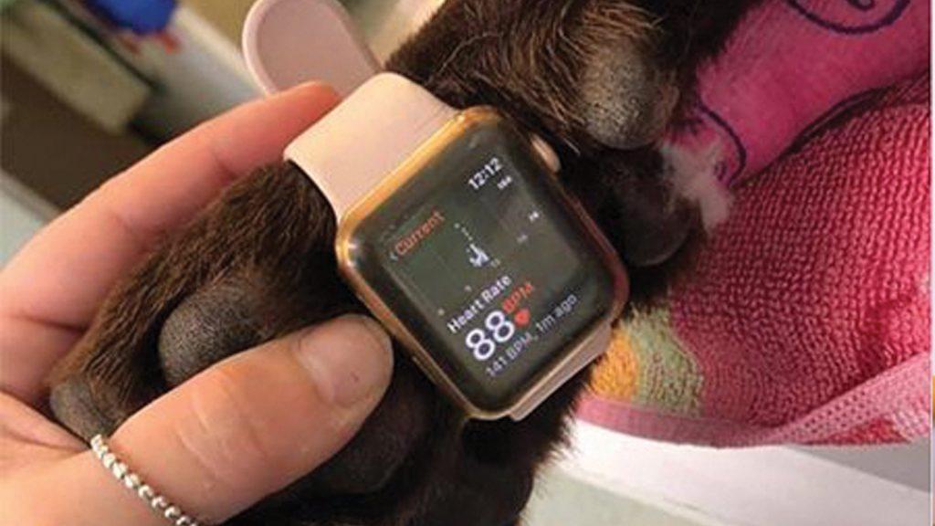 Akıllı saatinizle kedi hastalarınızın nabzını alın