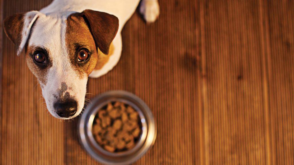 İmmünolojik grup gıda allerjisi