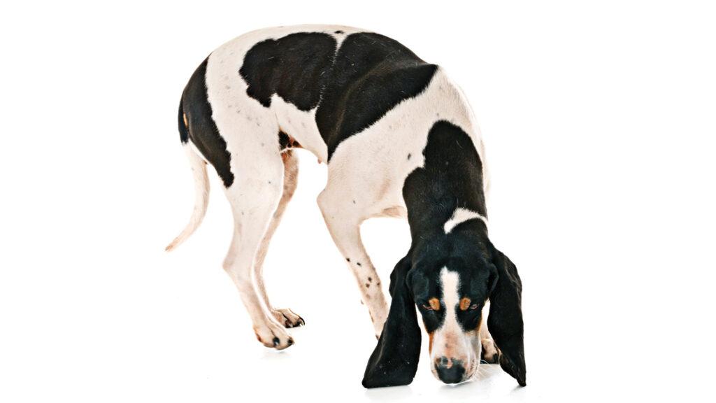 Köpekler zayıf termal enerjiyi tespit ediyor