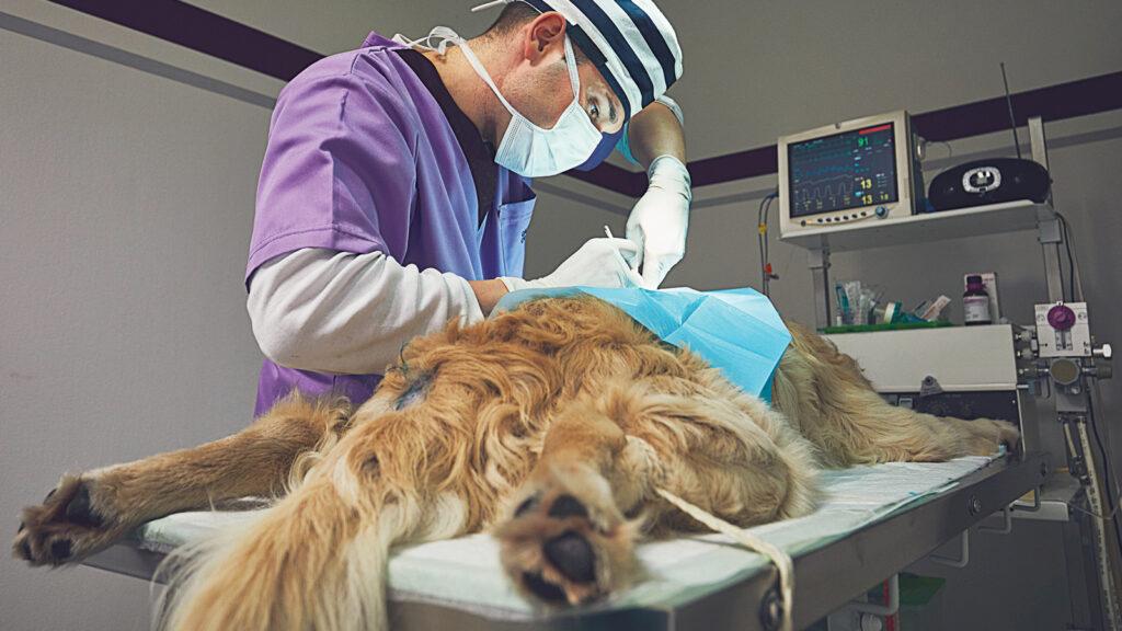 Genel anesteziyi takiben akut böbrek hasarı yaşayan hastası olan?