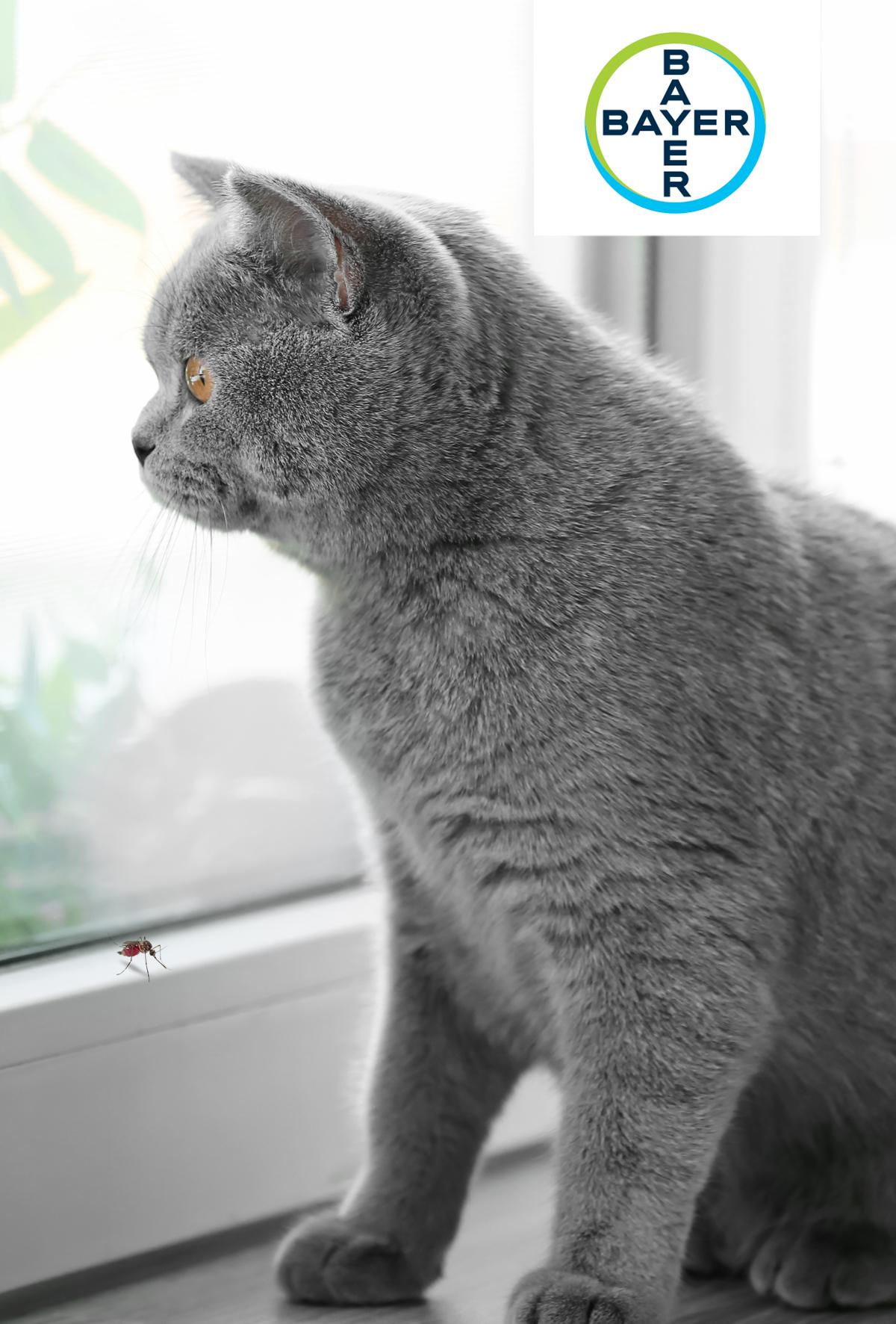 Kedilerde kalp kurdu hastalığı