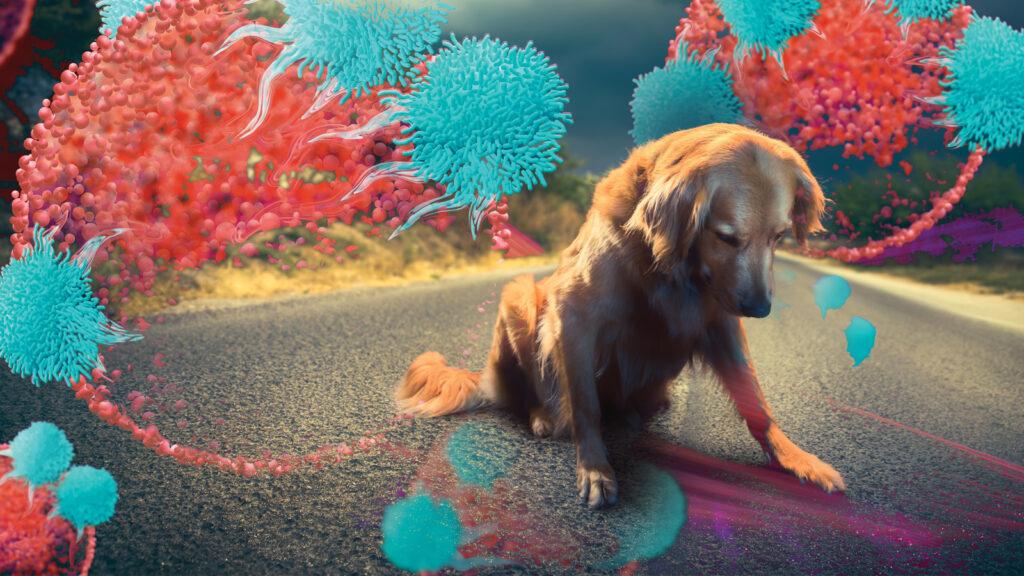 Bağışıklık sistemini modüle etmenin güncel yolları