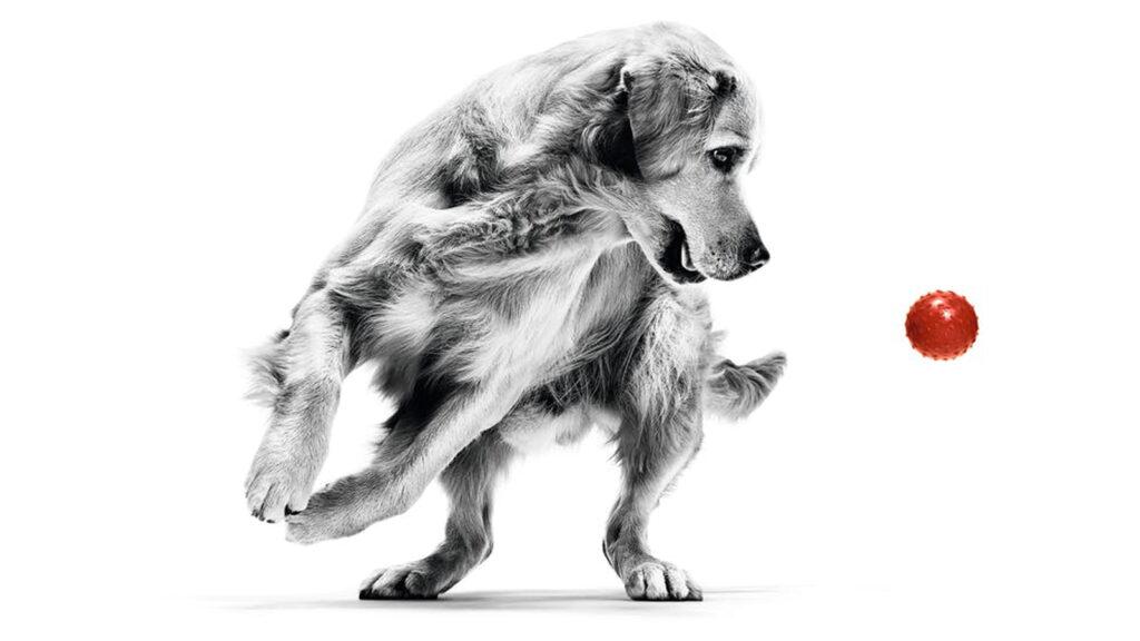 Royal Canin, dünya çapında tanınan fikir önderlerini veteriner hekimlerle buluşturuyor