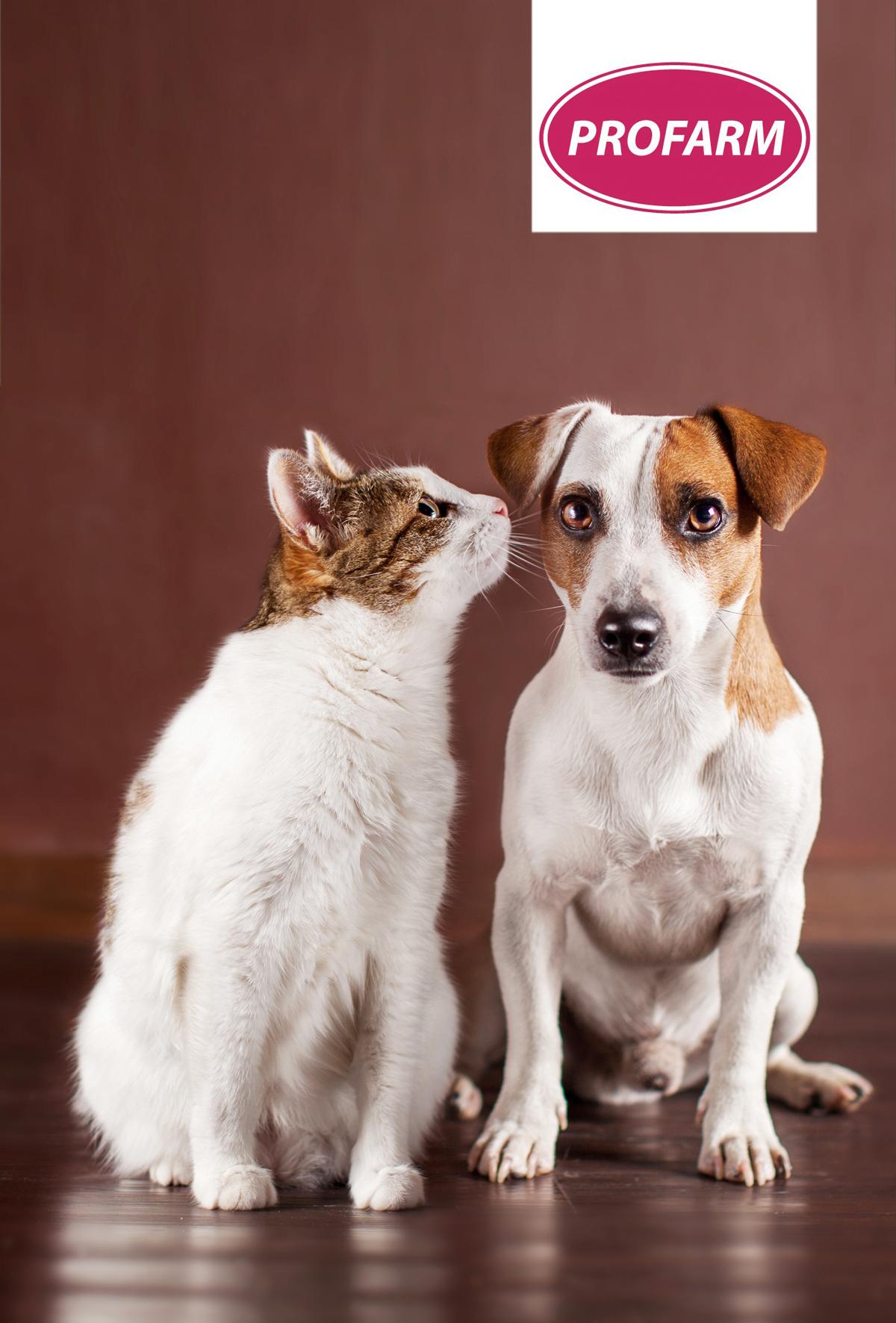 Kedi ve köpeklerde biyotin