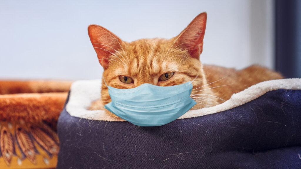 COVID-19'lu kedilerde nötralize edici antikorlar geliştirildi