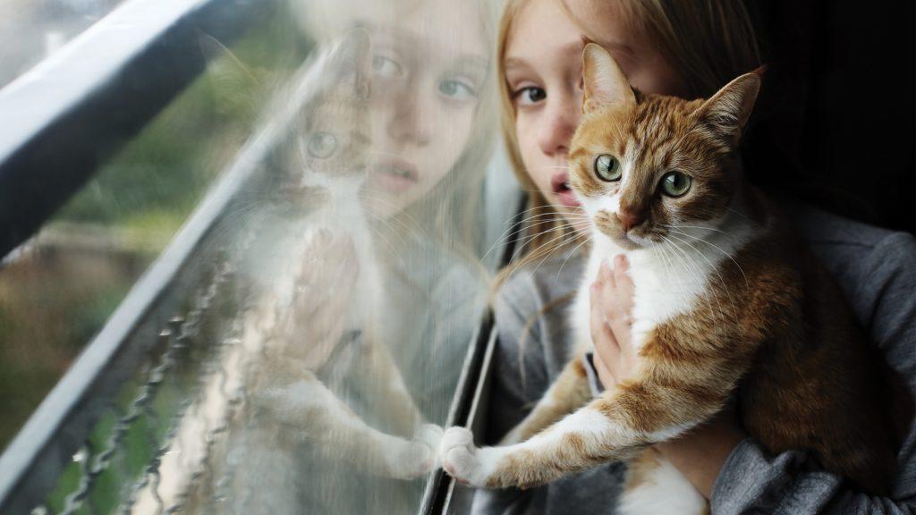 Kedi dostluğu otizmli çocuklar için faydalı
