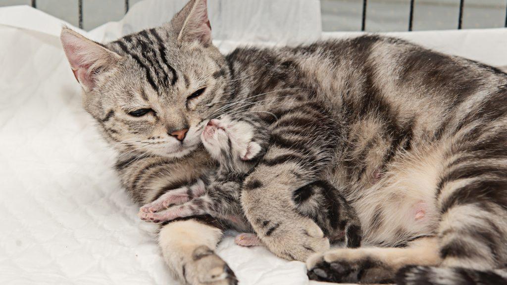 Yavru kediler yaşamlarının ilk haftalarında annenin dokunuşu için can atıyor