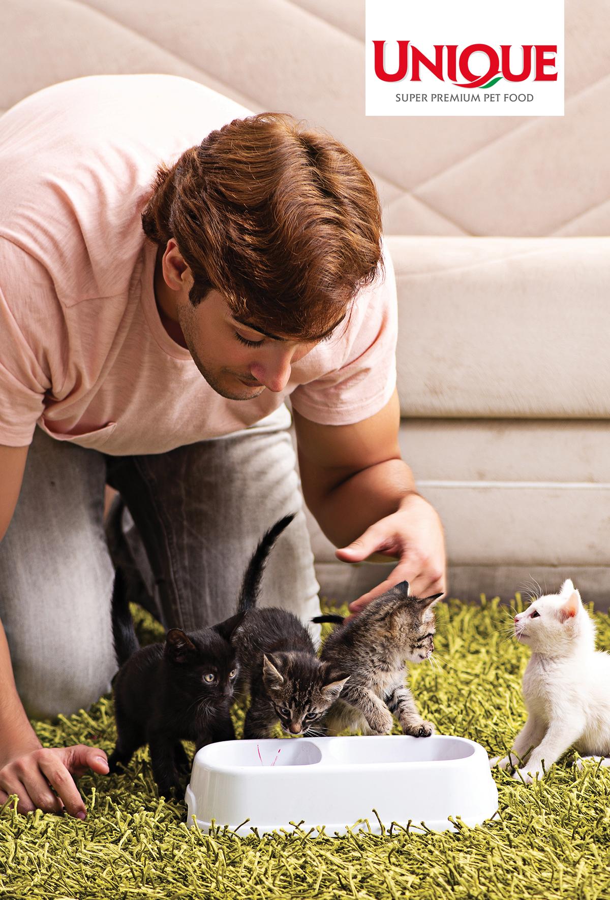 Yavru kedilerin beslenmesi