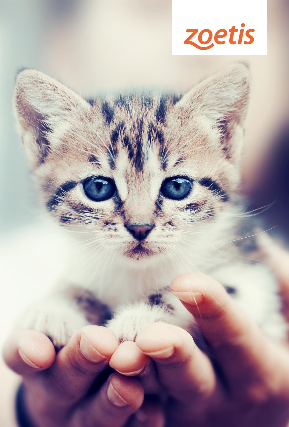 Kedilerin yaşam kalitesi ve süresini azaltan tehdit; Kedi Lösemi Virüsü