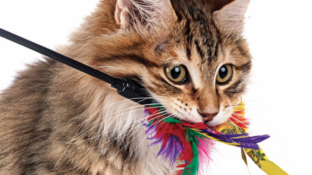 Etli gıdalar ve oyun oynama, kedilerde avlanmayı azaltabilir