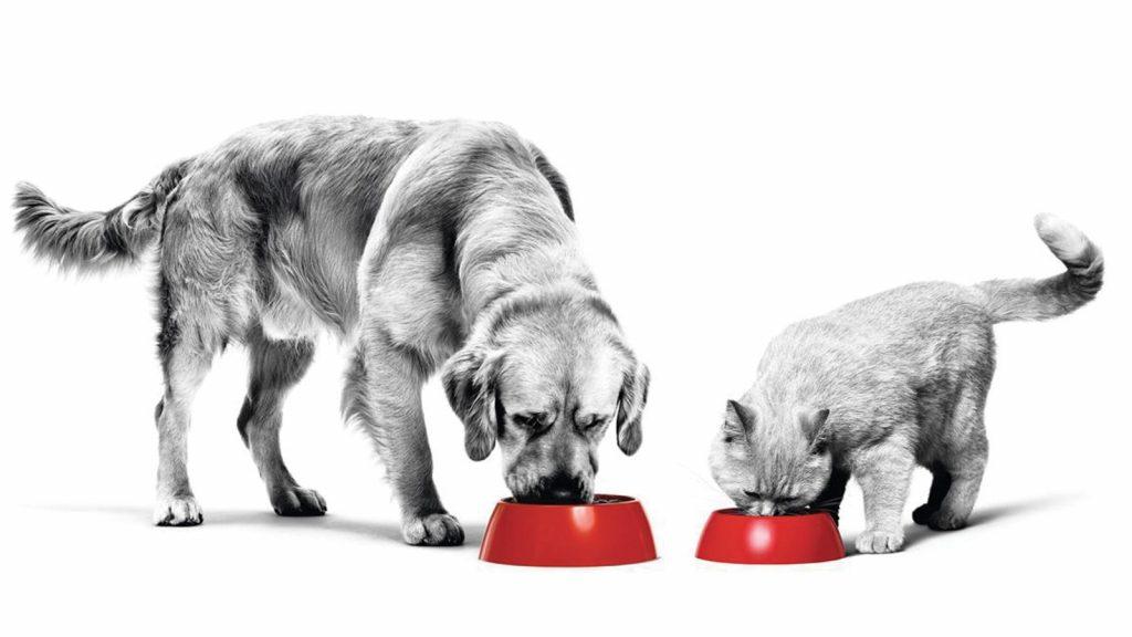 """Royal Canin Türkiye, yenilenen organizasyon yapısıyla """"Hayvanlar için Daha İyi Bir Dünya"""" sağlıyor"""