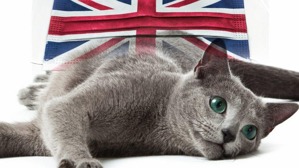İngiltere COVID varyantı, petlerde olası miyokardit ile ilişkilendirdi