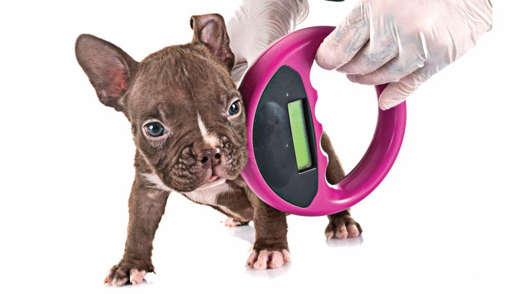 Evcil hayvanların kayıt altına alınma zorunluluğu geliyor