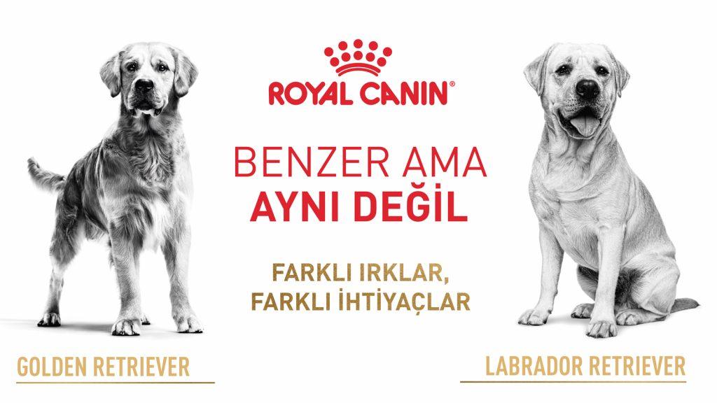 Dünya Obezite Günü'nde Royal Canin'den hayvan sahiplerine risklerin farkında olma çağrısı