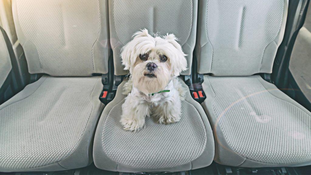 Yeni bir çalışma, köpeklerde sıcak çarpması tehdidini vurguluyor