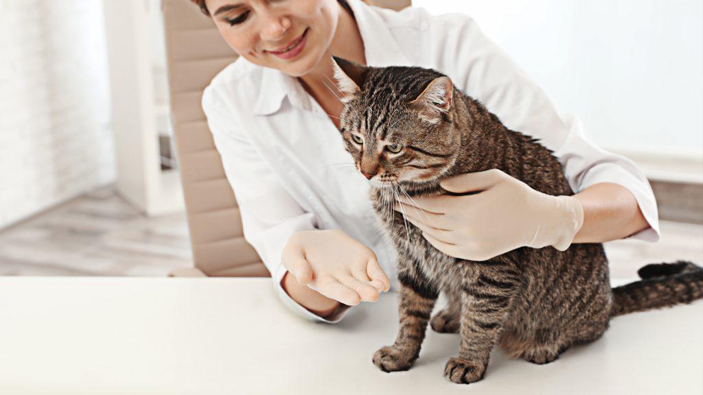Kedi KBH'sinde yeni tedavi olanakları