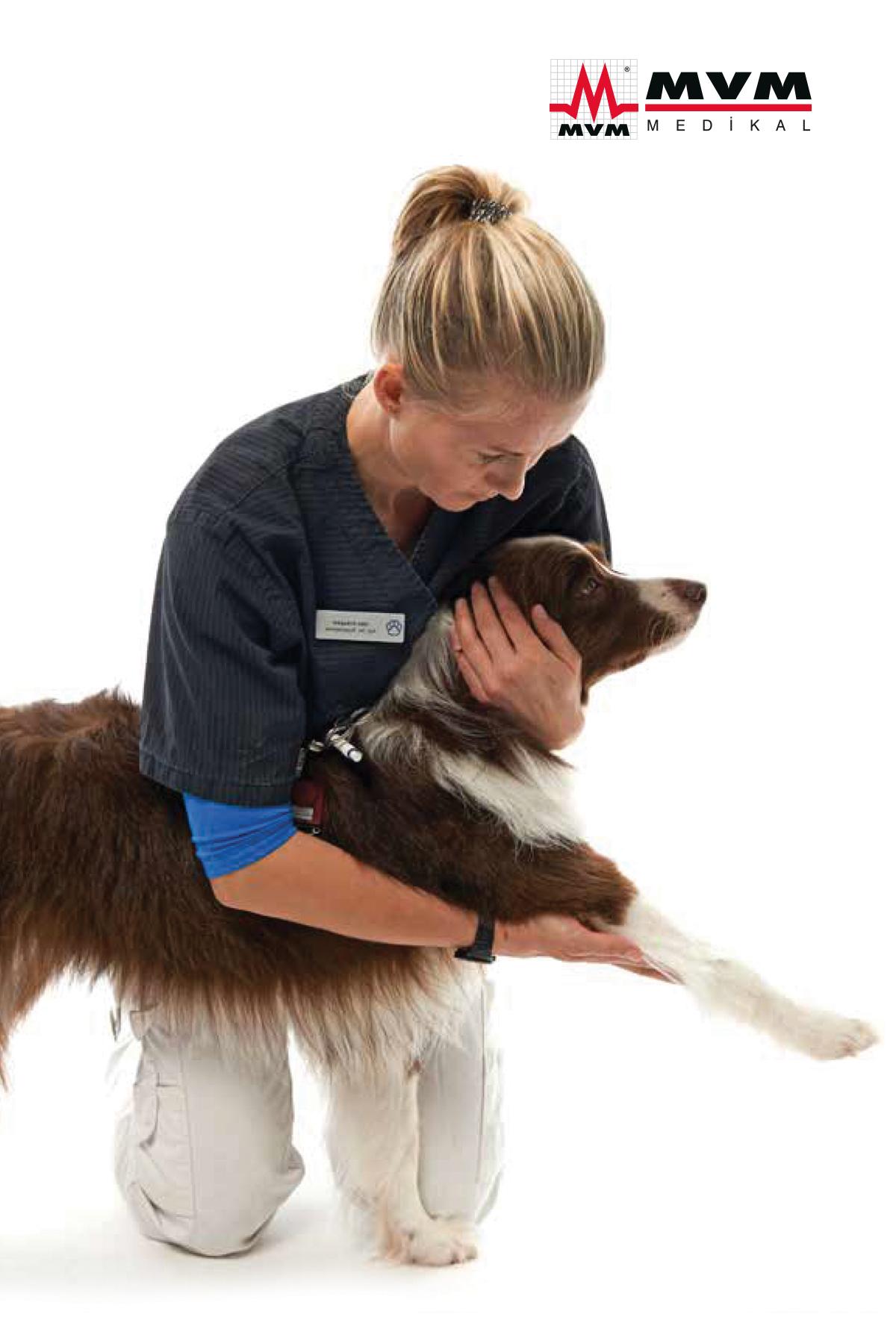Köpeklerde rehabilitasyon ve fizik tedavi