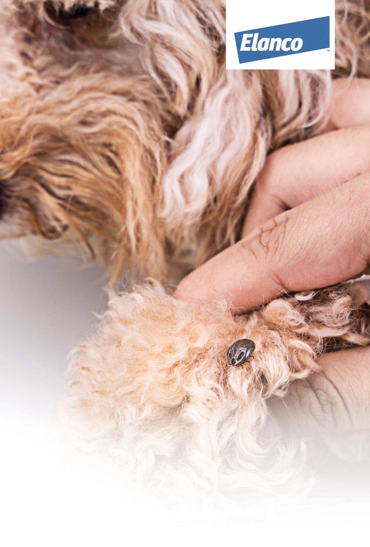 Petlerin vektör kaynaklı hastalıkları büyüyen küresel bir tehdit