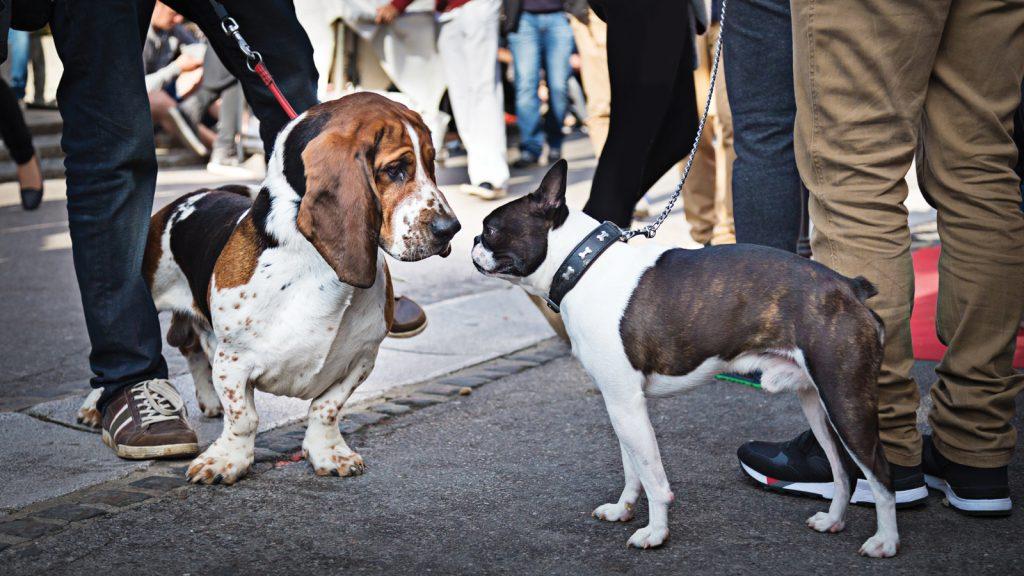 Köpekler arası iletişim