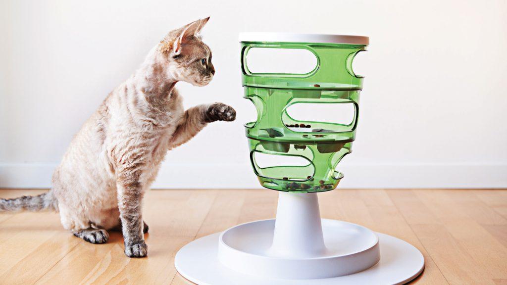 """Kediler """"Contrafreeloading""""e çok az ilgi gösteriyor"""