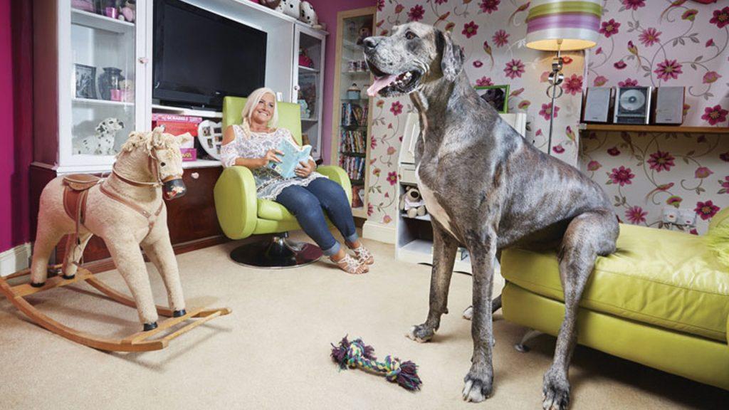 Dünyanın en uzun köpeği hayatını kaybetti
