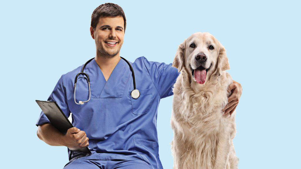 Köpekler, muayenede sahipleri yokken daha kaygılı!